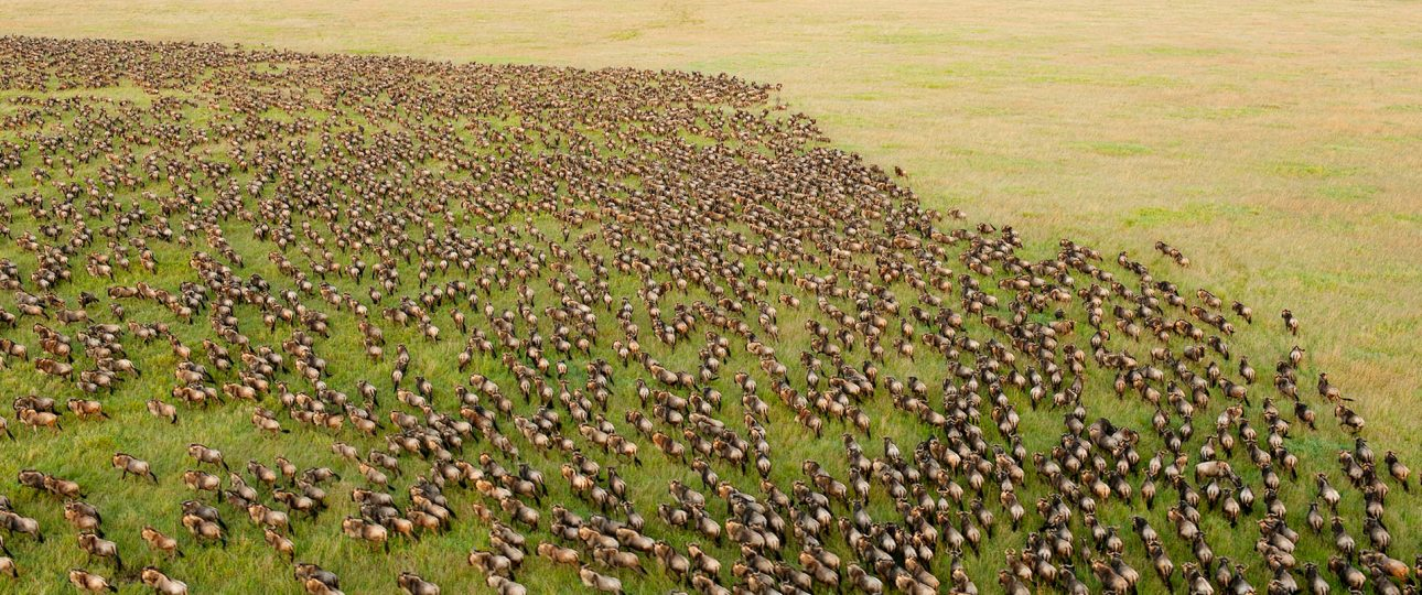 Great migration in Serengeti National Park, Tanzania