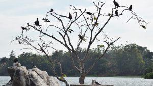 Birdwatching along the Nile